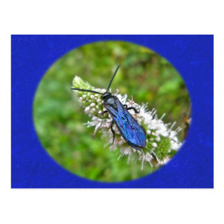 Double Banded Scoliid Wasp on Mint Postcard
