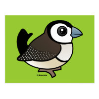 Double-barred Finch Postcard