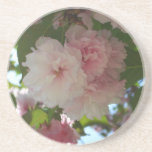 Double Blossoming Cherry Tree I Spring Floral Drink Coaster