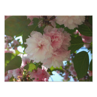 Double Blossoming Cherry Tree I Spring Floral Photo Print