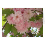 Double Blossoming Cherry Tree II Pink Spring Card