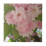 Double Blossoming Cherry Tree II Pink Spring Ceramic Tile