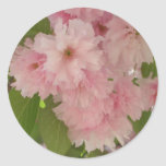 Double Blossoming Cherry Tree II Pink Spring Classic Round Sticker