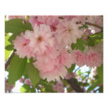 Double Blossoming Cherry Tree II Pink Spring Photo Print