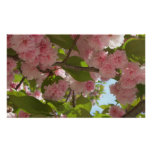 Double Blossoming Cherry Tree III Print