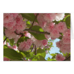 Double Blossoming Cherry Tree III Spring Floral Card