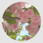Double Blossoming Cherry Tree III Spring Floral Classic Round Sticker