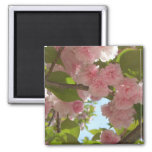 Double Blossoming Cherry Tree III Spring Floral Magnet