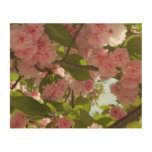 Double Blossoming Cherry Tree III Spring Floral Wood Print