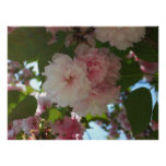 Double Blossoming Cherry Trees I Print