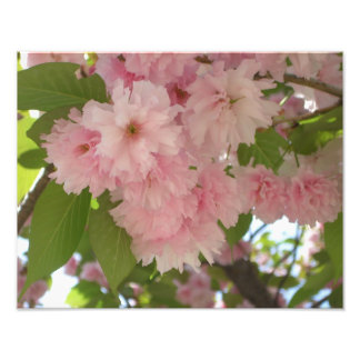 Double Blossoming Cherry Trees II Pink Spring Photo Print