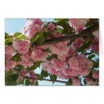 Double Blossoming Cherry Trees IV Pink Spring Card
