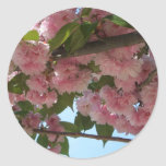 Double Blossoming Cherry Trees IV Pink Spring Classic Round Sticker