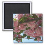 Double Blossoming Cherry Trees IV Pink Spring Magnet