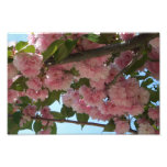 Double Blossoming Cherry Trees IV Pink Spring Photo Print