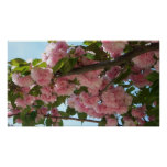 Double Blossoming Cherry Trees IV Pink Spring Poster