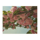 Double Blossoming Cherry Trees IV Pink Spring Wood Print