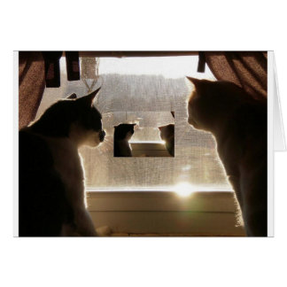 double cats picture card