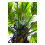 Double Coconut palm Greeting Cards