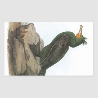 Double-crested Cormorant by Audubon Rectangular Sticker