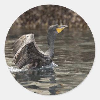 Double-crested Cormorant, Castle Rock, Shumagin Is Classic Round Sticker
