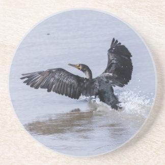 Double-crested Cormorant Coasters