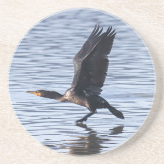 Double-crested Cormorant Drink Coaster