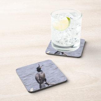 Double-crested Cormorant Beverage Coaster