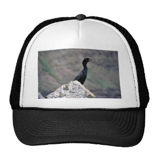Double-crested Cormorant Hat