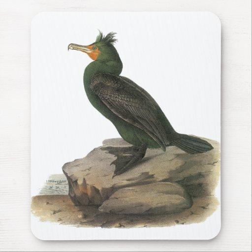Double-crested Cormorant, John Audubon Mouse Pad