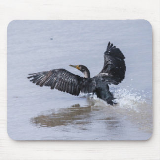 Double-crested Cormorant Mouse Pad