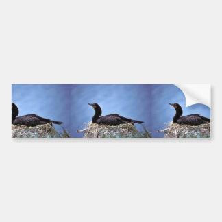 Double-crested Cormorants Car Bumper Sticker