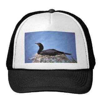 Double-crested Cormorants Hats