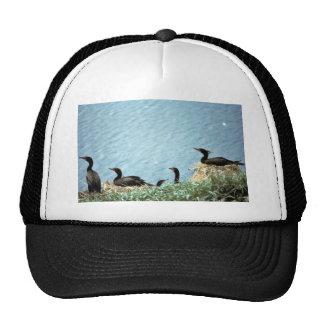 Double-crested Cormorants Nesting Hats