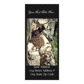 Double-crested Cormorants Nesting Full Color Rack Card