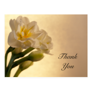 Double Daffodils Thank You Postcard