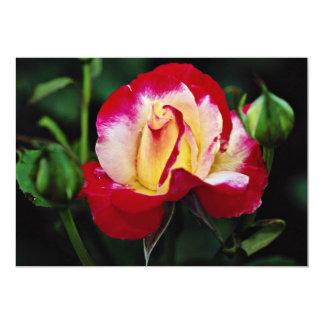 Double Delight Hybrid Tea Rose 'Andeli' White flow Card
