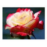'Double Delight' hybrid tea rose Postcard