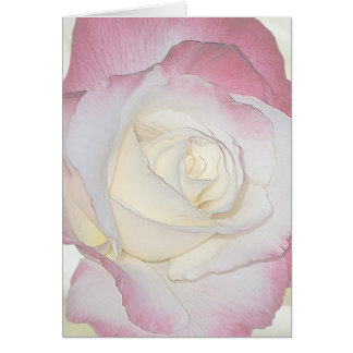 Double Delight Rose Card