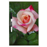 Double Delight Rose.jpg Dry-Erase Board