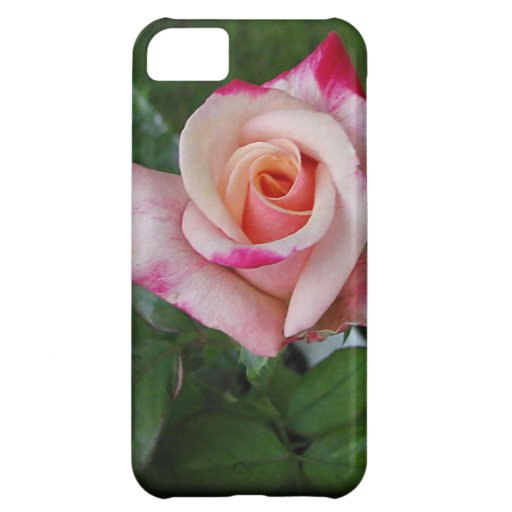 Double Delight Rose.jpg iPhone 5C Cases