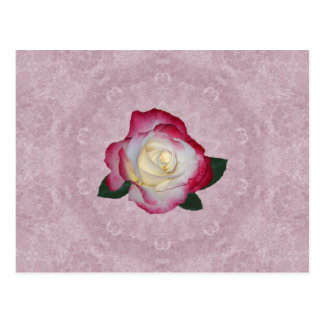Double Delight Rose Postcard