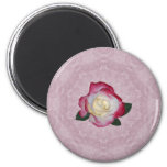 Double Delight Rose Refrigerator Magnets