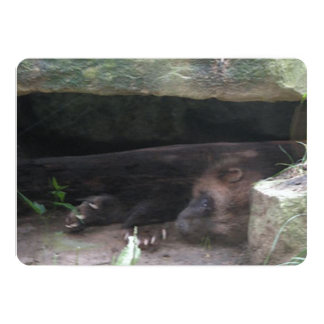 Double-Exposed Wolverine Rests, Shows Claws Card