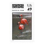 Double Flamingos Stamp