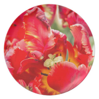 Double Frilly Tulip Plate