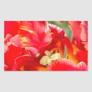 Double Frilly Tulip Rectangular Sticker