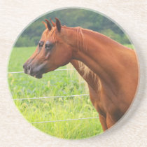 Double Image BOGO Colts Coaster