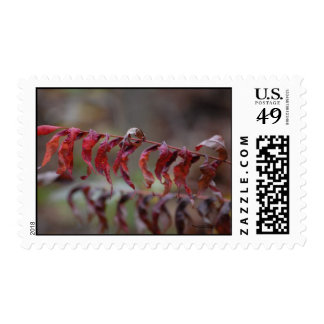 Double Image Stamps