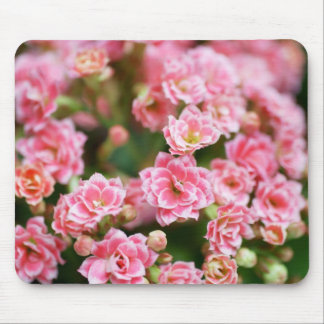 Double Kalanchoe in Pink Mouse Pad